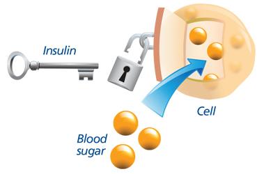 Insulin1